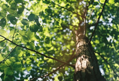 committing to sustainability tree