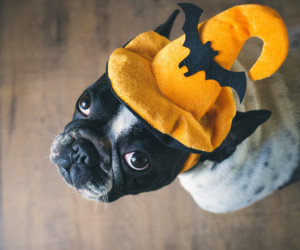 Trick or (DOG) Treat Halloween at Stazione Novella Halloween events in Hong Kong