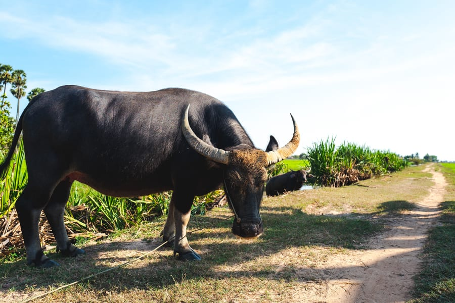 Cambodia travel what to see Countryside tour