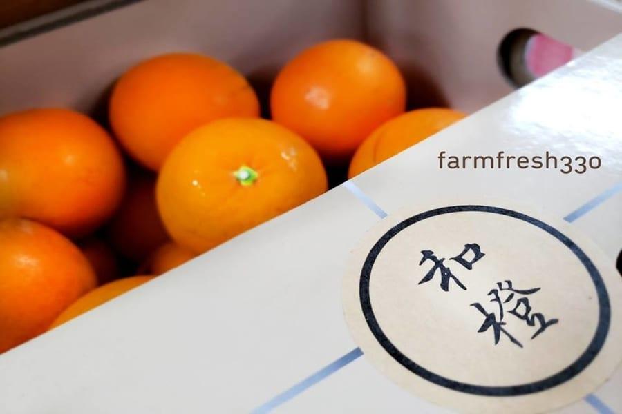 social enterprises in Hong Kong Farmfresh 330