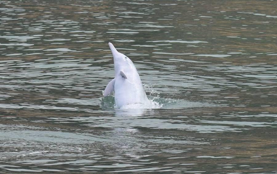 Hong Kong Dolphinwatch activities for kids in Hong Kong