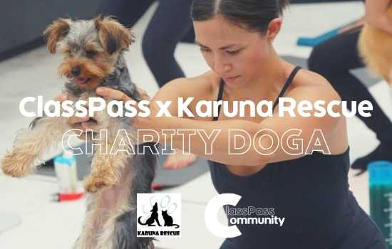 Charity Doga to Fight Against Dog Meat Festival