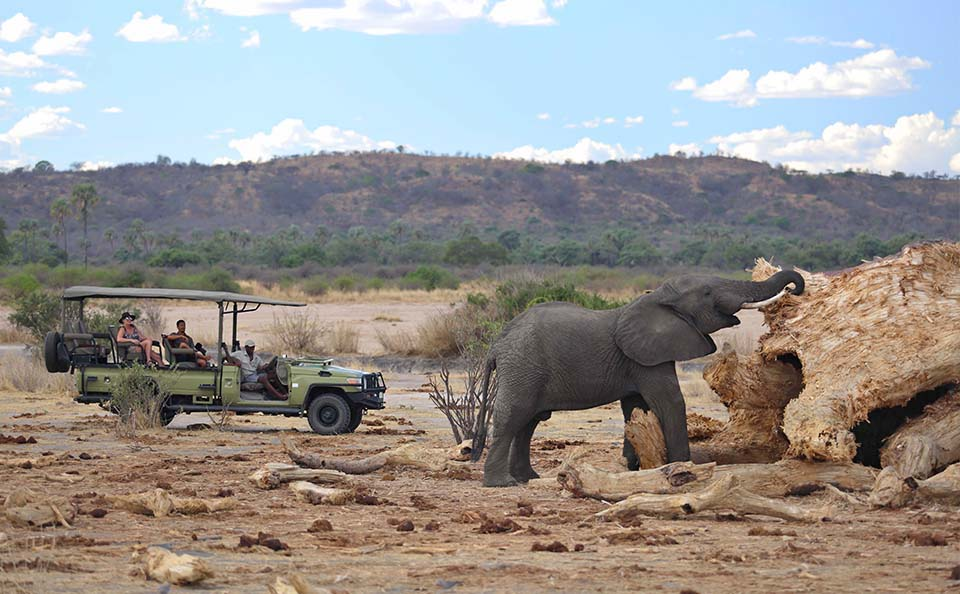 elephant eating on safari | Unique places to visit in Africa
