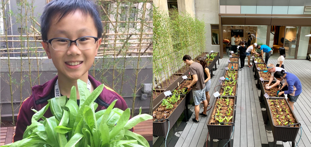 theDesk x Rooftop Republic Urban Farming
