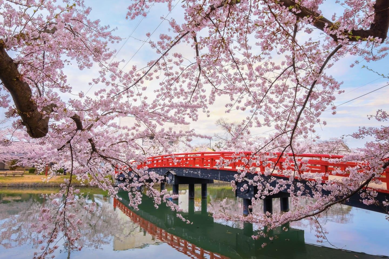 Japanese Cherry Blossom Festival Pop-up Garden at The Mira Hong Kong