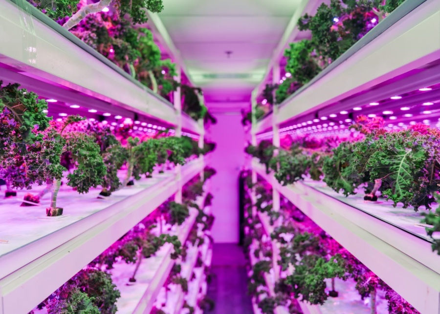 Get excited lovers of locally grown (and tasty!) produce, as Sustenir Agriculture is launching in Hong Kong