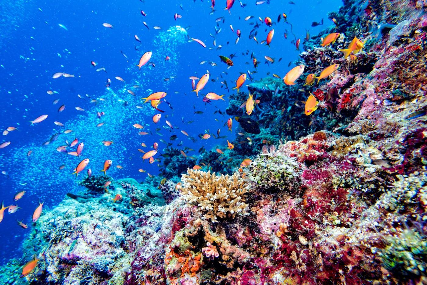 Anantara Dhigu Maldives fish